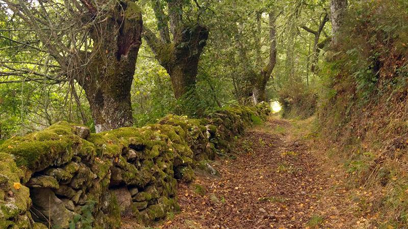 Camino de Forcas
